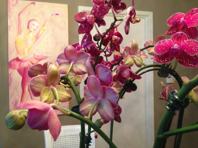 Upclose Orchids