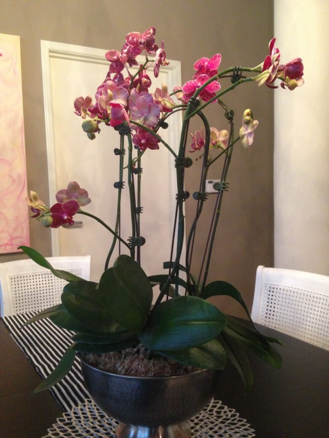 New Orchid Center Piece